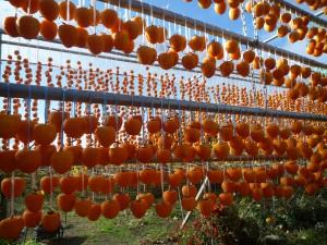 同じく岩波農園の枯露柿